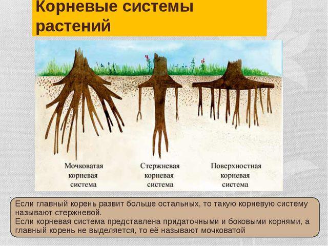 Корневые системы растений Если главный корень развит больше остальных, то так...