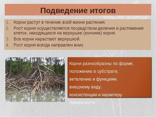 Подведение итогов Корни растут в течение всей жизни растения. Рост корня осущ...