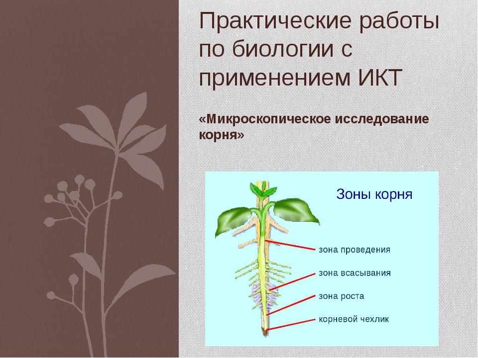 «Микроскопическое исследование корня» Практические работы по биологии с приме...