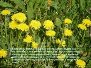 В народной медицине одуванчик считается средством от бессонницы и «жизненным