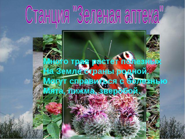 Много трав растет полезных На Земле страны родной. Могут справиться с болезнь...