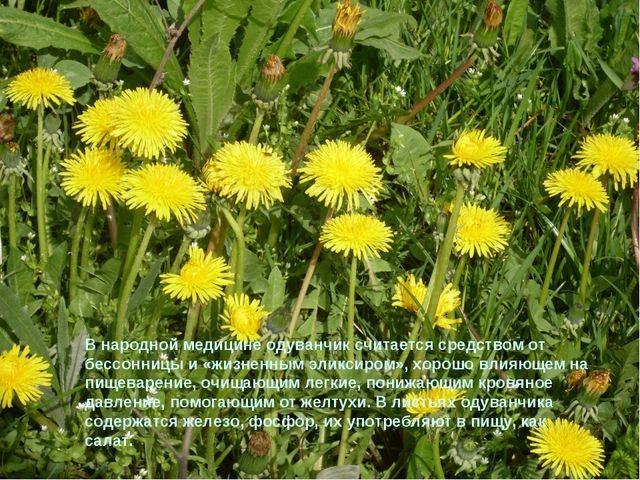 В народной медицине одуванчик считается средством от бессонницы и «жизненным...