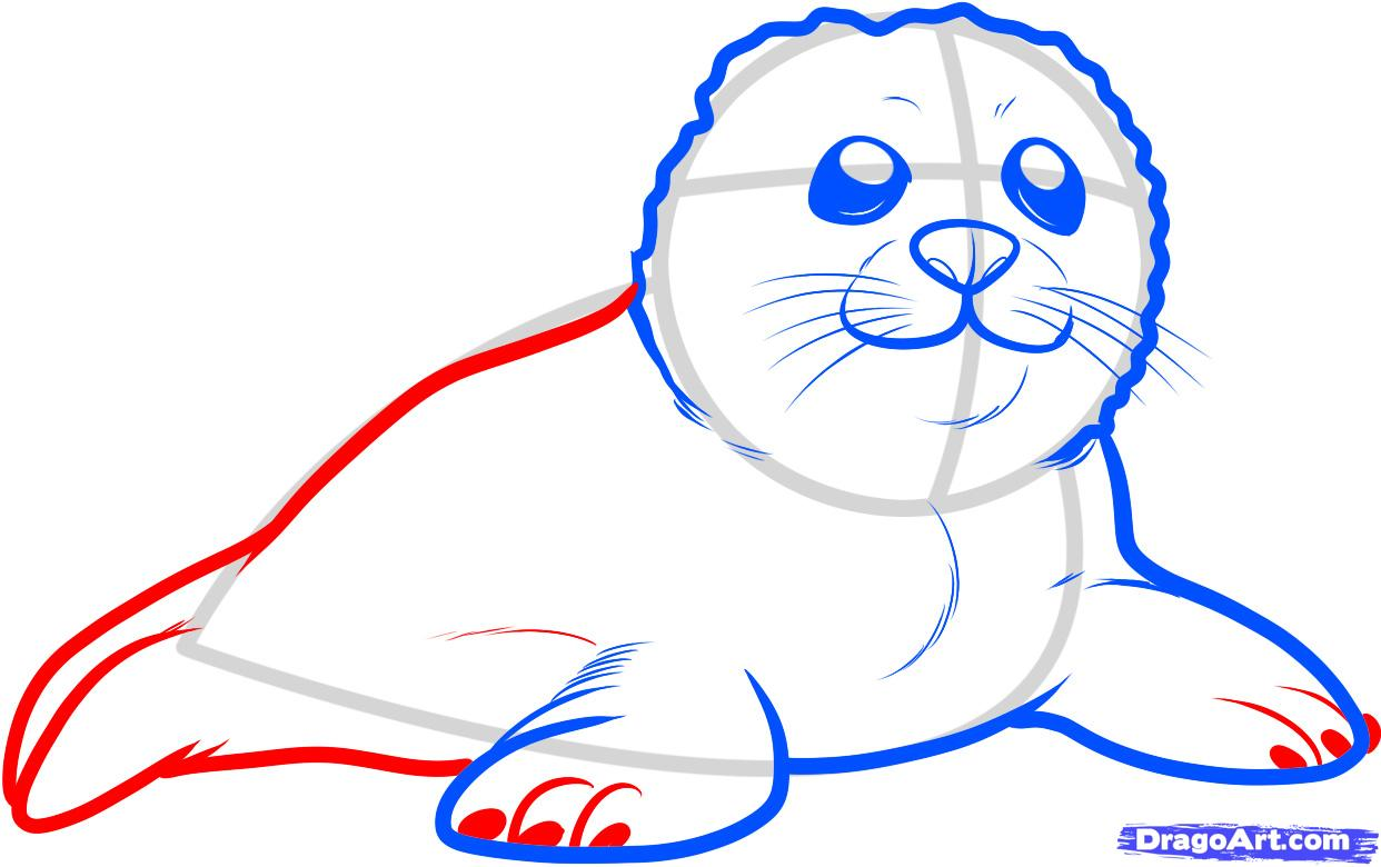 http://imgs.steps.dragoart.com/how-to-draw-a-seal-pup-seal-pup-step-5_1_000000088099_5.jpg