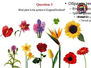 What plant is the symbol of England/Scotland? Question 3 Round II