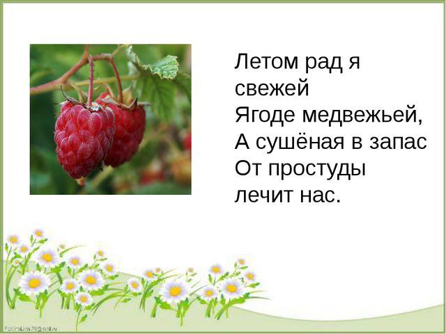 Летом рад я свежей Ягоде медвежьей, А сушёная в запас От простуды лечит нас.