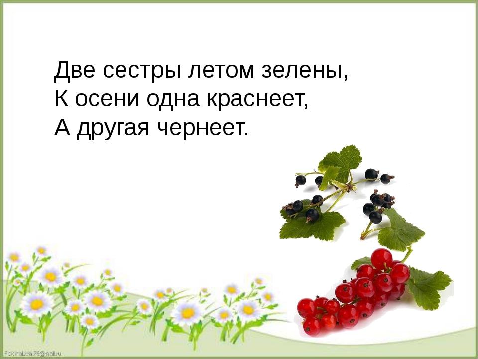 Две сестры летом зелены, К осени одна краснеет, А другая чернеет.