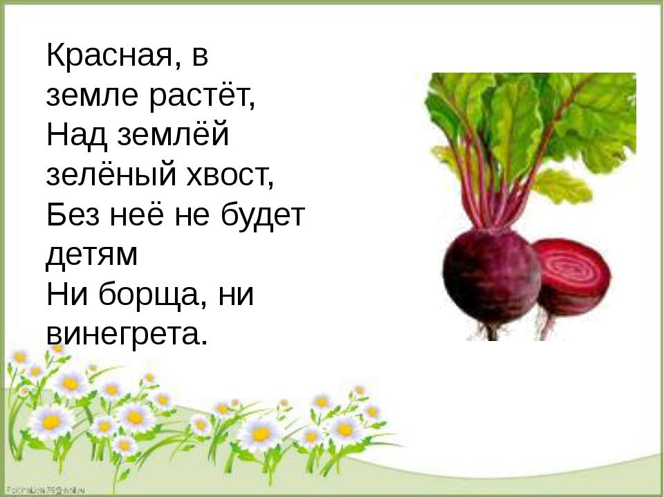 Красная, в земле растёт, Над землёй зелёный хвост, Без неё не будет детям Ни...