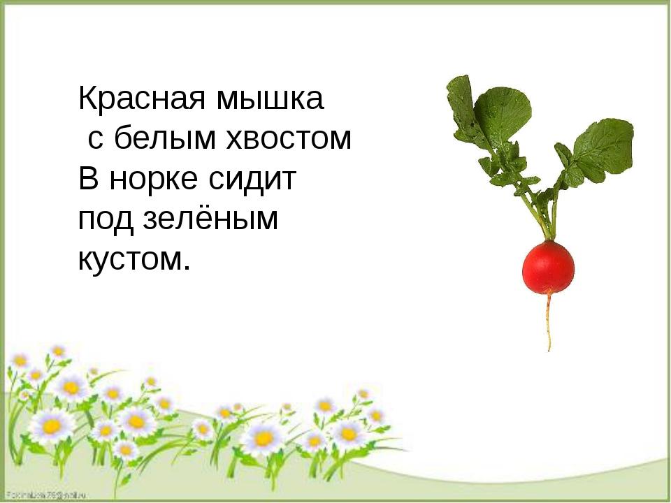 Красная мышка с белым хвостом В норке сидит под зелёным кустом.
