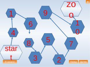 1 4 6 9 8 7 10 5 2 3 start zoo В начало Далее Назад X
