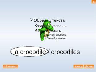 a crocodile / crocodiles В начало Далее Назад X