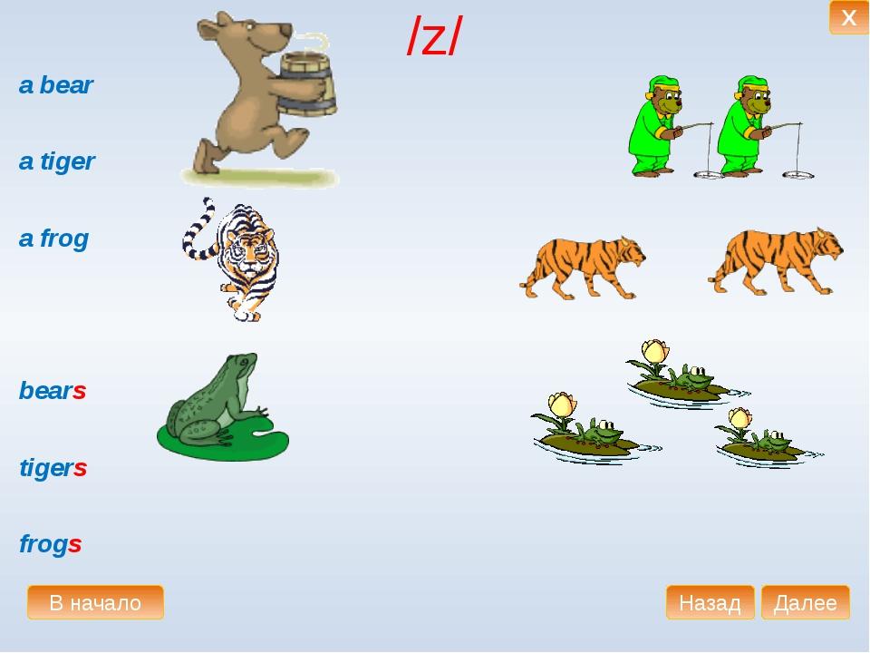 /z/ a bear a tiger a frog bears tigers frogs В начало Далее Назад X