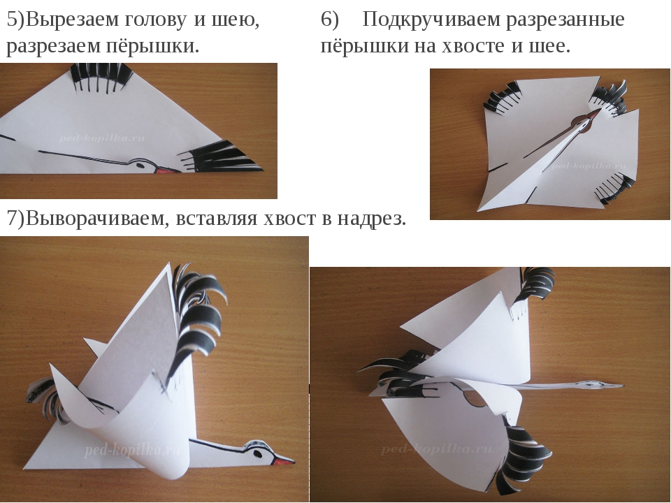 5)Вырезаем голову и шею, разрезаем пёрышки. 6) Подкручиваем разрезанные п...