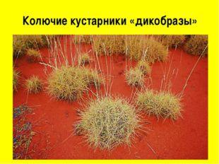 Колючие кустарники «дикобразы»