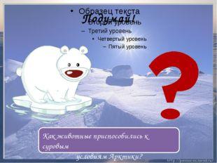 Подумай! Как животные приспособились к суровым условиям Арктики?