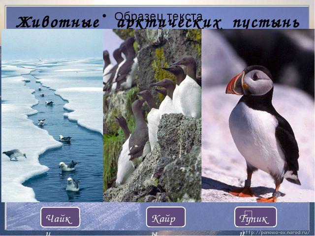Животные арктических пустынь Кайры Тупики Чайки ʹ