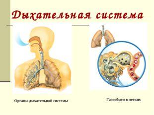 Газообмен в легких Органы дыхательной системы Дыхательная система