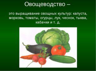 Овощеводство – это выращивание овощных культур: капуста, морковь, томаты, ог