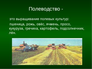 Полеводство - это выращивание полевых культур: пшеница, рожь, овёс, ячмень,