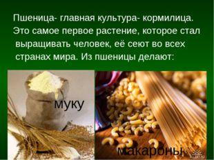 Пшеница- главная культура- кормилица. Это самое первое растение, которое стал