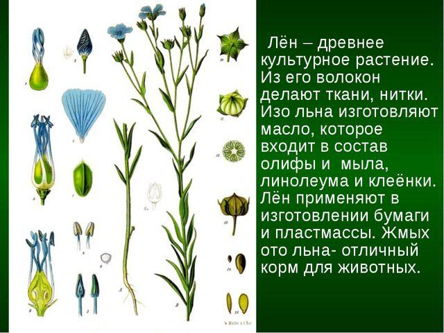 Лён – древнее культурное растение. Из его волокон делают ткани, нитки. Изо л...