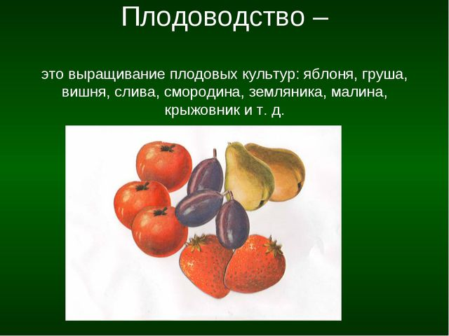 Плодоводство – это выращивание плодовых культур: яблоня, груша, вишня, слива...