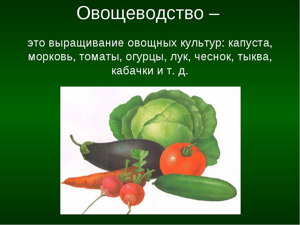 Овощеводство – это выращивание овощных культур: капуста, морковь, томаты, ог...