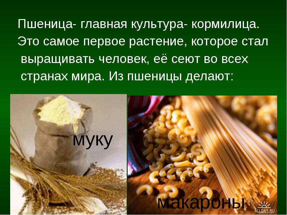 Пшеница- главная культура- кормилица. Это самое первое растение, которое стал...