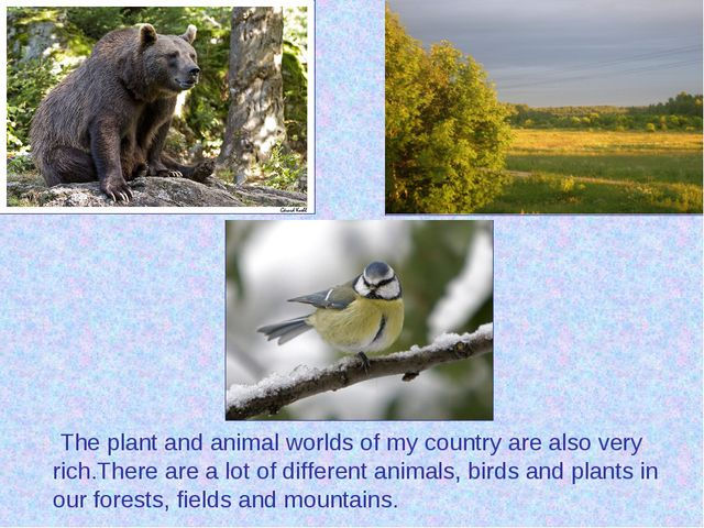 The plant and animal worlds of my country are also very rich.There are a lo...