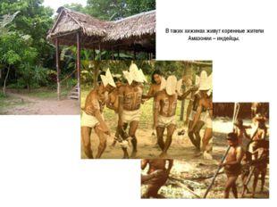 В таких хижинах живут коренные жители Амазонии – индейцы.