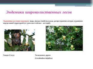 Эндемики широколиственных лесов Эндемичные растения (эндемики)- виды, иногда