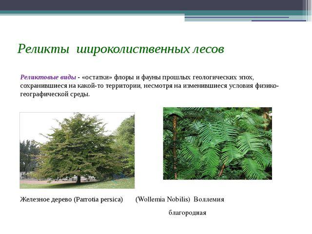 Реликты широколиственных лесов Реликтовые виды - «остатки» флоры и фауны прош...