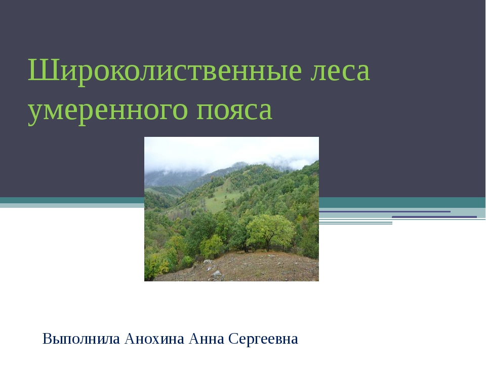 Широколиственные леса умеренного пояса Выполнила Анохина Анна Сергеевна