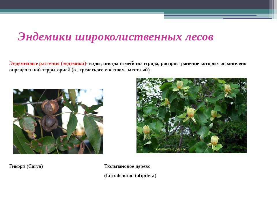 Эндемики широколиственных лесов Эндемичные растения (эндемики)- виды, иногда...