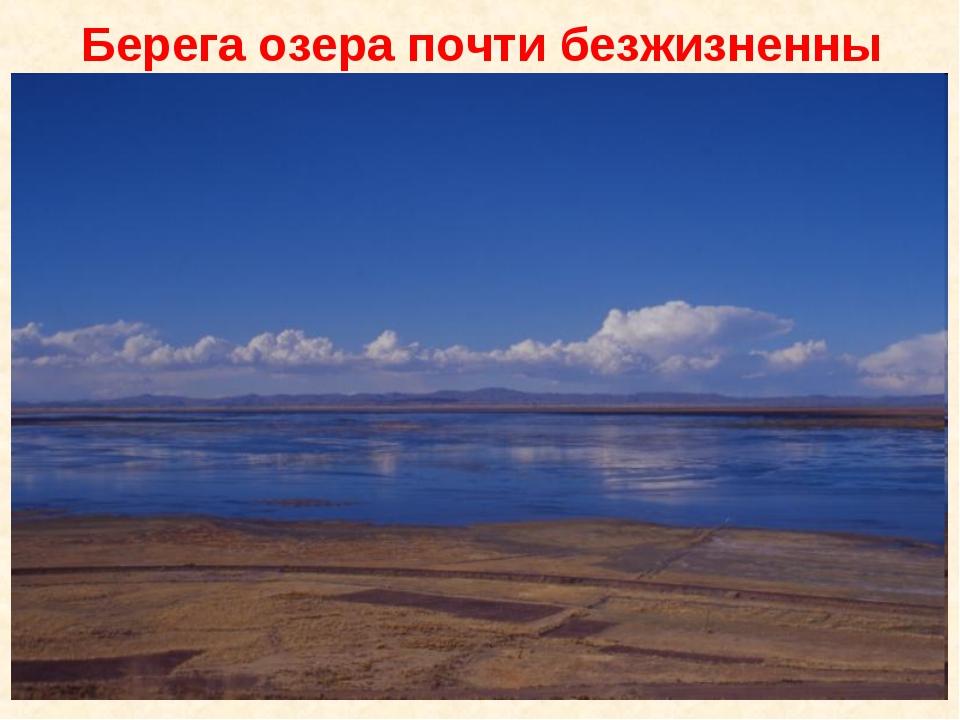 Берега озера почти безжизненны