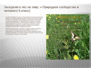 Экскурсия в лес на тему: « Природное сообщество и человек»( 6 класс) Экскурси