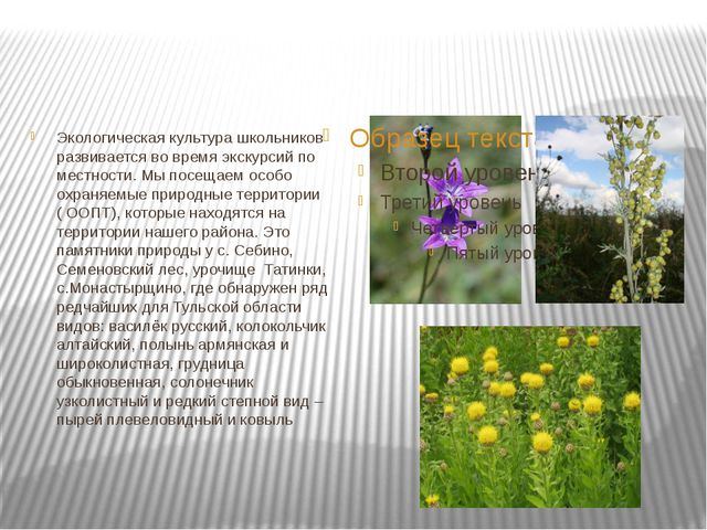 Экологическая культура школьников развивается во время экскурсий по местност...