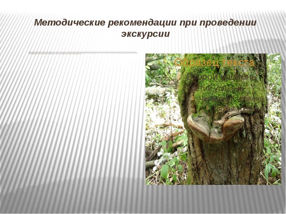 Методические рекомендации при проведении экскурсии При проведении экскурсий в...
