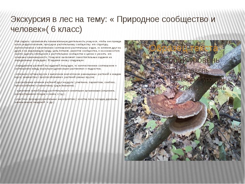 Экскурсия в лес на тему: « Природное сообщество и человек»( 6 класс) Моя зада...