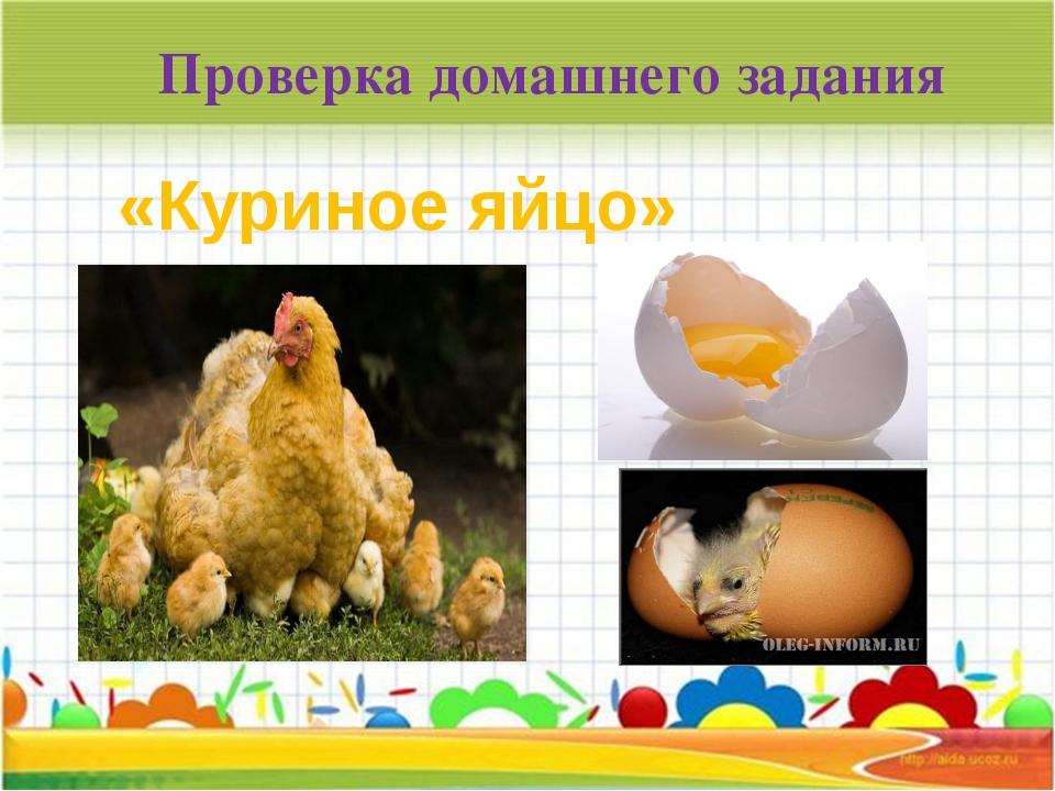 Проверка домашнего задания «Куриное яйцо»