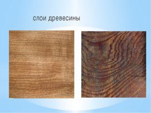 слои древесины