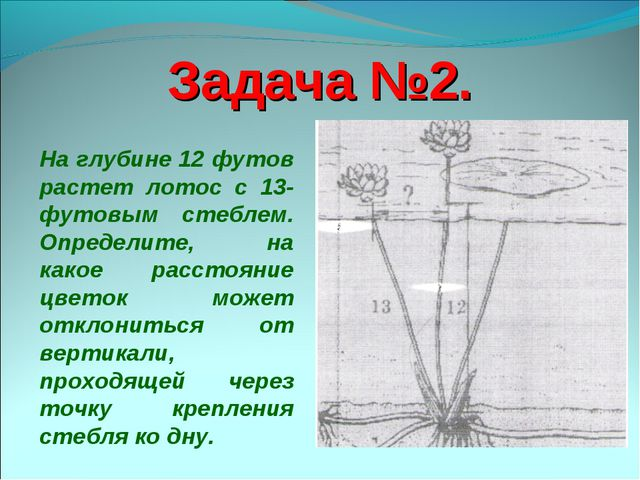 Задача №2. На глубине 12 футов растет лотос с 13-футовым стеблем. Определите,...