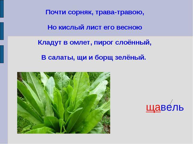Почти сорняк, трава-травою, Но кислый лист его весною Кладут в омлет, пирог с...