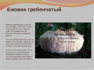 """Ежовик гребенчатый Ежовик гребенчатый, который еще называют """"обезьянья голова"""