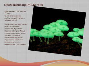 Биолюминесцентный гриб Гриб мицена - это один из 71 вида биолюминесцентных гр