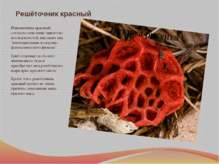 Решёточник красный Решеточник красный, согласно описанию одного из исследоват
