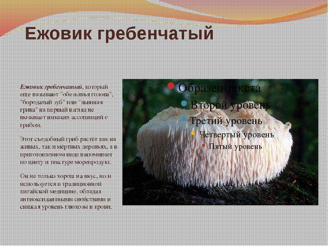 """Ежовик гребенчатый Ежовик гребенчатый, который еще называют """"обезьянья голова..."""