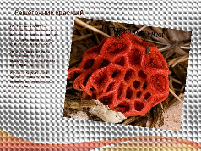 Решёточник красный Решеточник красный, согласно описанию одного из исследоват...