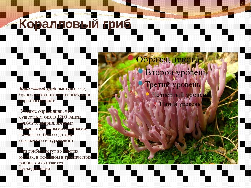 Коралловый гриб Коралловый гриб выглядит так, будто должен расти где-нибудь н...