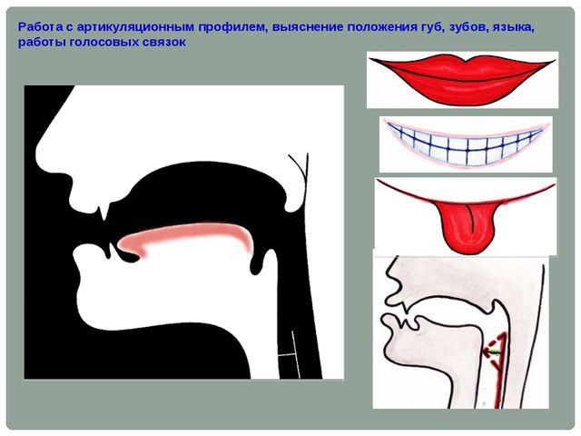Работа с артикуляционным профилем, выяснение положения губ, зубов, языка, раб...