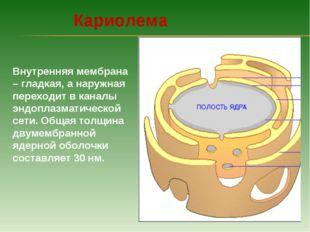 Внутренняя мембрана – гладкая, а наружная переходит в каналы эндоплазматическ